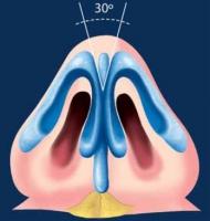 Кончик носа