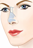 stroenie nosa